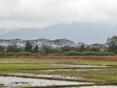 Chiang Rai Province